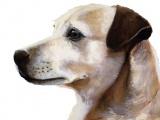 Pet Portrait Commision