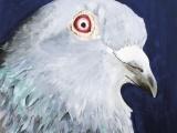 pigeonweb